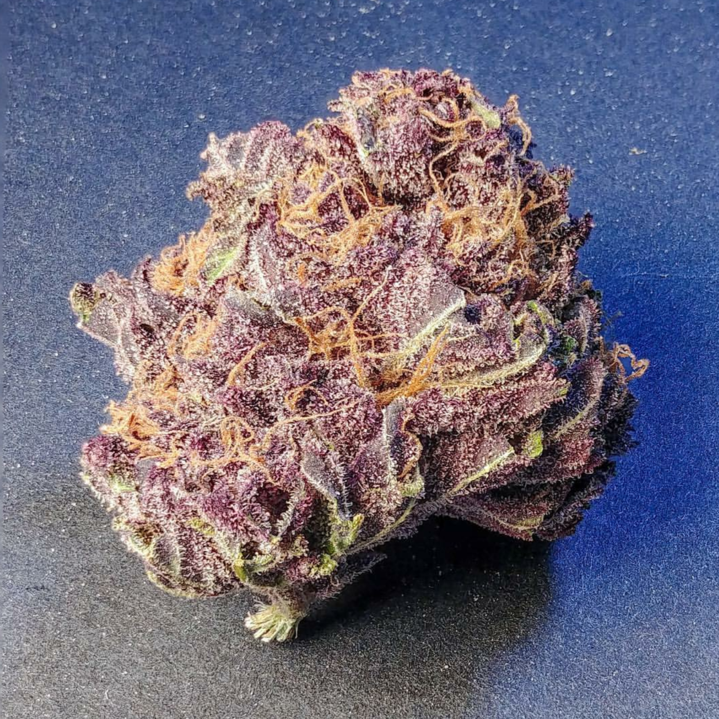 Purple Persuasion5