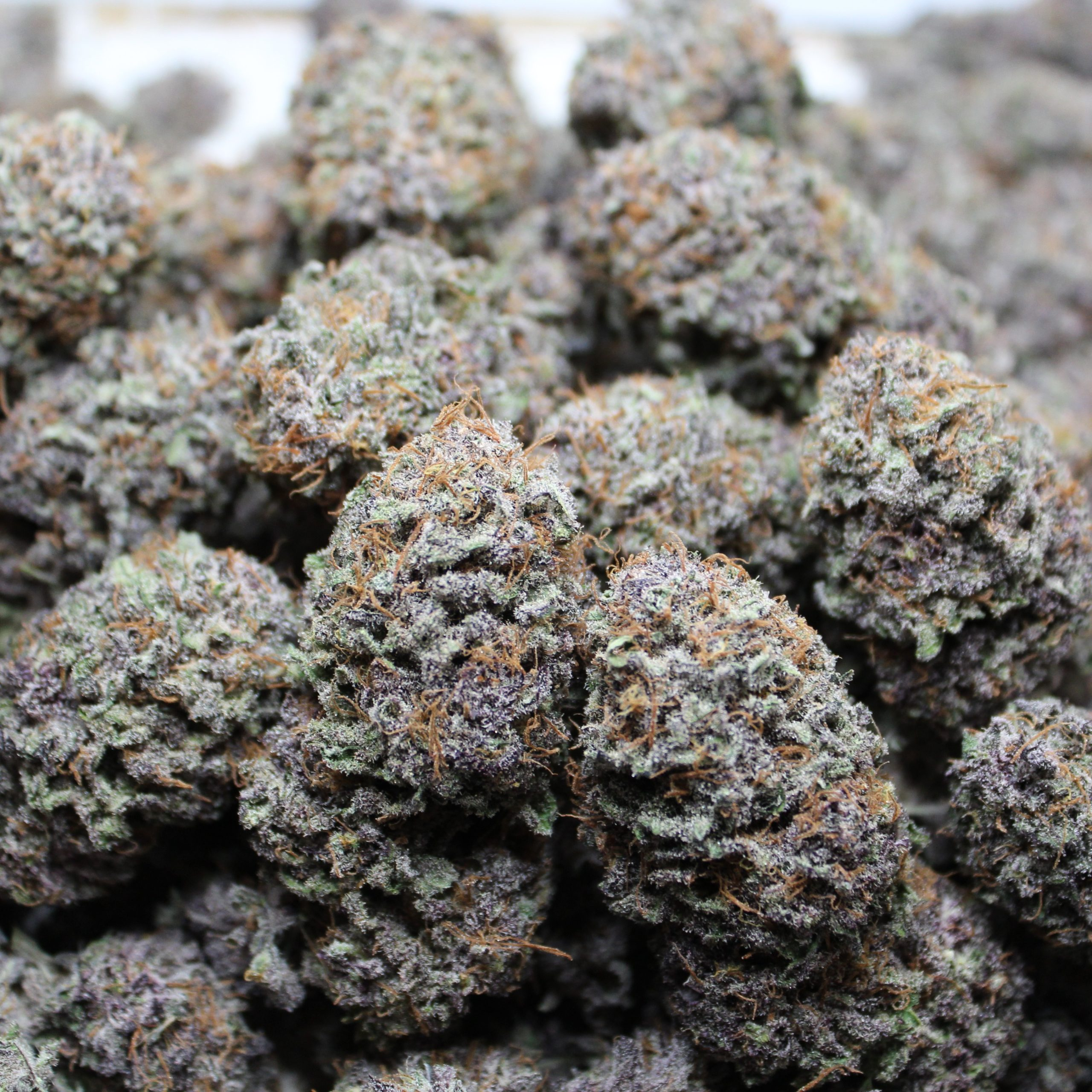 purple pineapple express #4 dried flowers