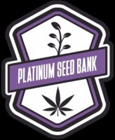 Platinum seed bank cannabis seeds