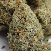 dream come true cannabis flowers